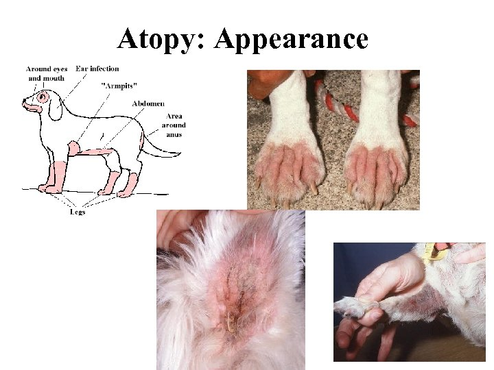 Atopy: Appearance