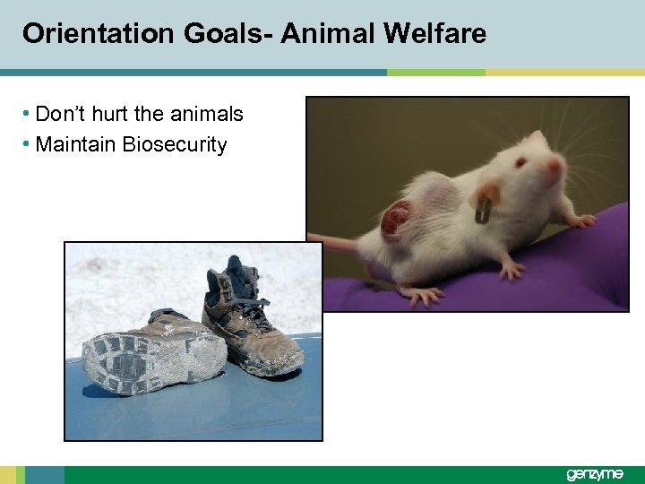 Orientation Goals- Animal Welfare • Don't hurt the animals • Maintain Biosecurity