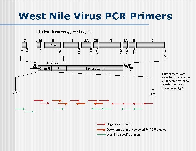West Nile Virus PCR Primers Derived from core, pre. M regions C pr. M