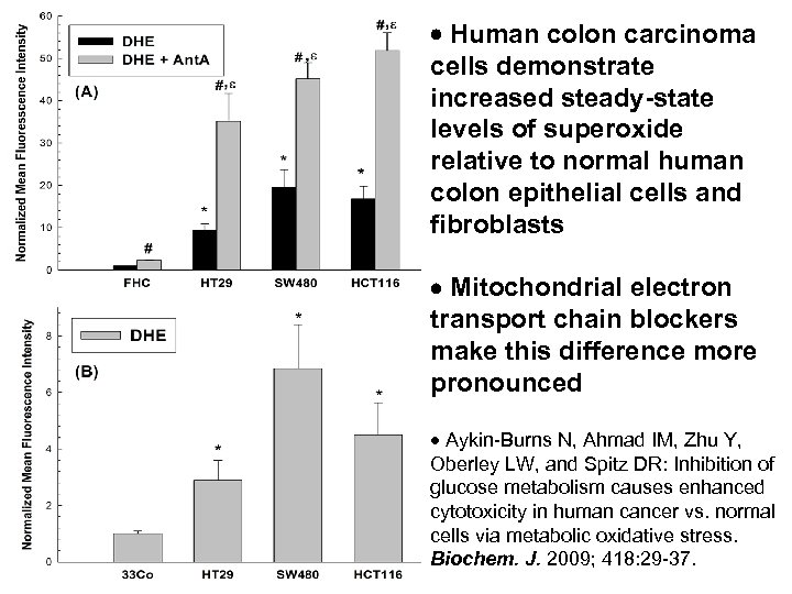 Human colon carcinoma cells demonstrate increased steady-state levels of superoxide relative to normal
