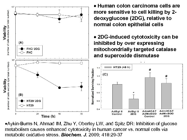 Human colon carcinoma cells are more sensitive to cell killing by 2 deoxyglucose