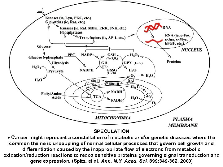 SPECULATION Cancer might represent a constellation of metabolic and/or genetic diseases where the common