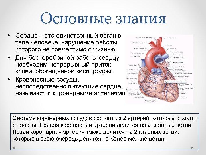 Основные знания • Сердце – это единственный орган в теле человека, нарушение работы которого