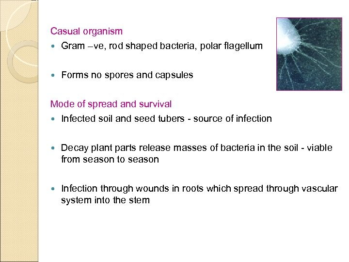 Casual organism Gram –ve, rod shaped bacteria, polar flagellum Forms no spores and capsules