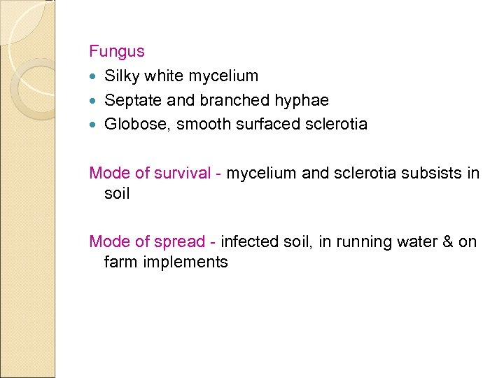 Fungus Silky white mycelium Septate and branched hyphae Globose, smooth surfaced sclerotia Mode of