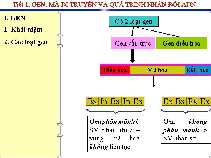 I. GEN Có 2 loại gen 1. Khái niệm 2. Các loại gen Gen