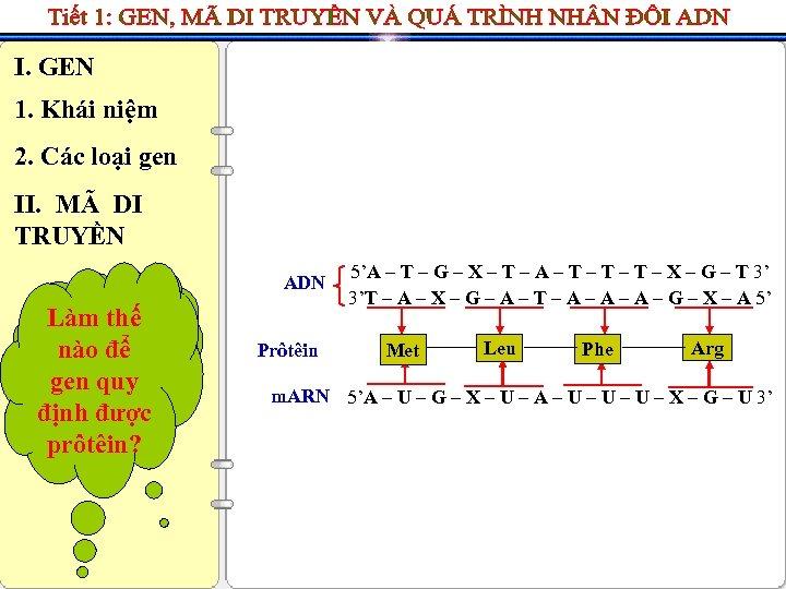 I. GEN 1. Khái niệm 2. Các loại gen II. MÃ DI TRUYỀN ADN