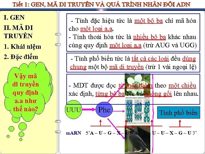 I. GEN II. MÃ DI TRUYỀN 1. Khái niệm 2. Đặc điểm Vậy phổ