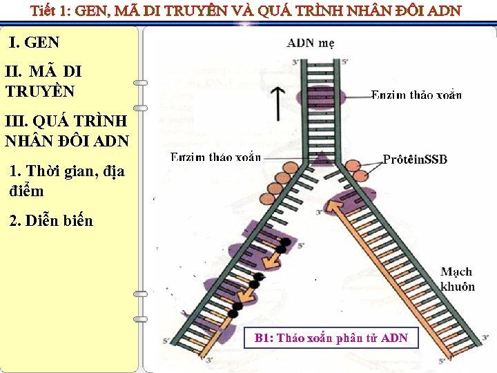 I. GEN II. MÃ DI TRUYỀN III. QUÁ TRÌNH NH N ĐÔI ADN 1.