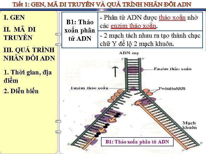 I. GEN II. MÃ DI TRUYỀN III. QUÁ TRÌNH NH N ĐÔI ADN -