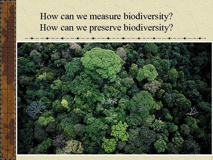 How can we measure biodiversity? How can we preserve biodiversity?