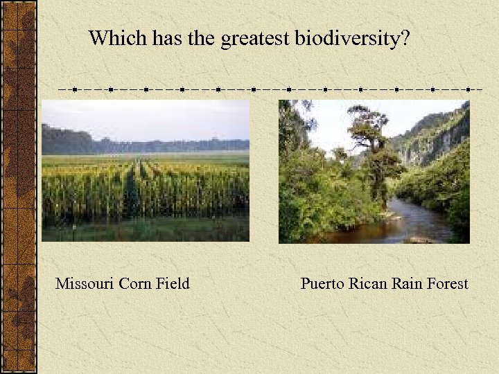 Which has the greatest biodiversity? Missouri Corn Field Puerto Rican Rain Forest