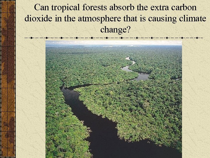 Can tropical forests absorb the extra carbon dioxide in the atmosphere that is causing