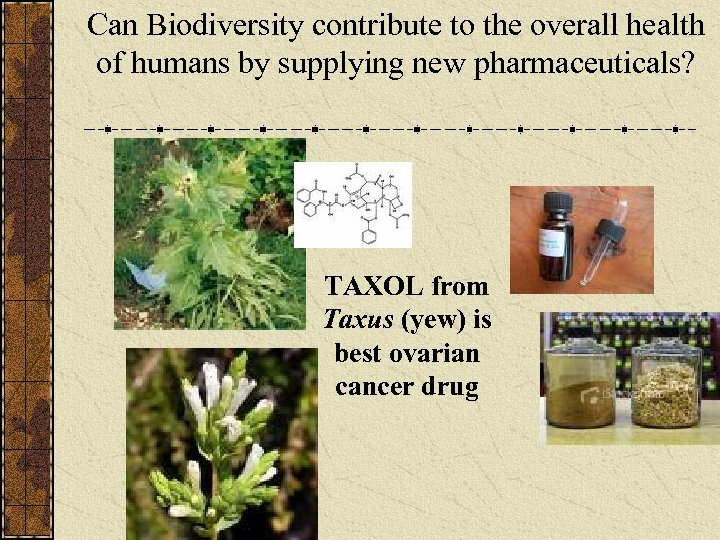 Can Biodiversity contribute to the overall health of humans by supplying new pharmaceuticals? TAXOL