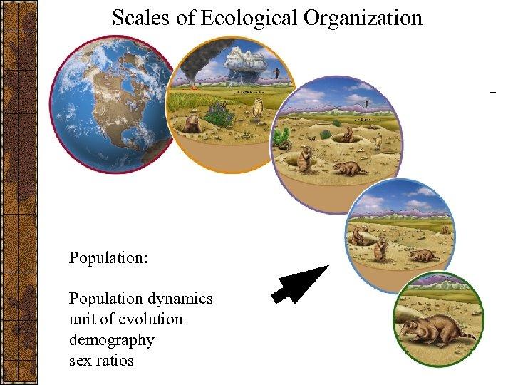 Scales of Ecological Organization Population: Population dynamics unit of evolution demography sex ratios