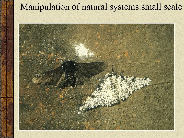 Manipulation of natural systems: small scale