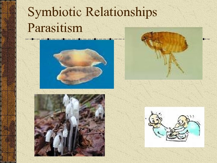 Symbiotic Relationships Parasitism
