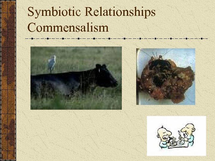 Symbiotic Relationships Commensalism