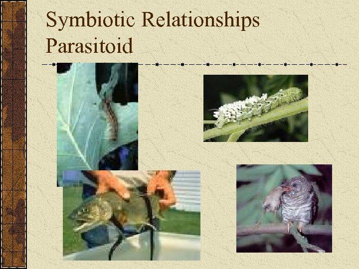 Symbiotic Relationships Parasitoid