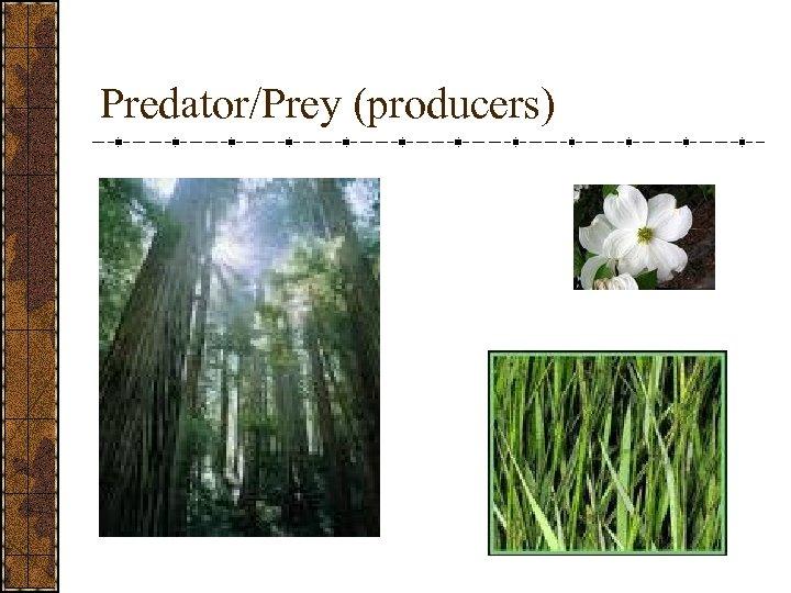 Predator/Prey (producers)