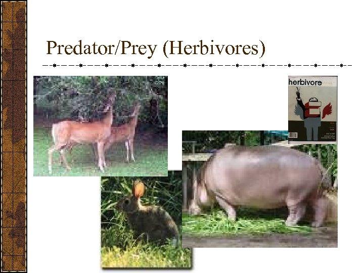 Predator/Prey (Herbivores)