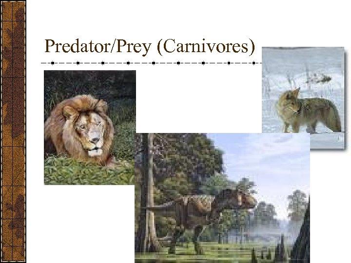 Predator/Prey (Carnivores)