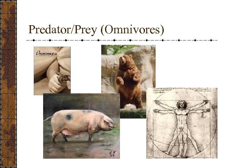 Predator/Prey (Omnivores)