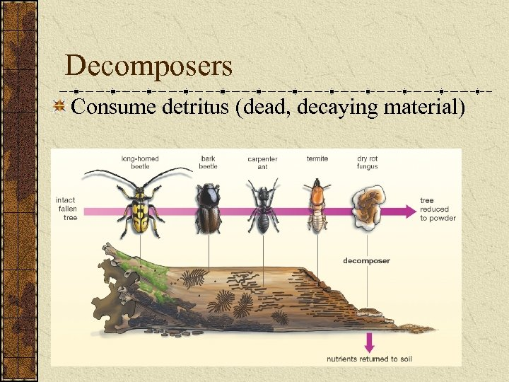 Decomposers Consume detritus (dead, decaying material)