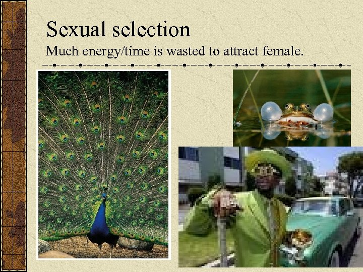 Sexual selection Much energy/time is wasted to attract female.