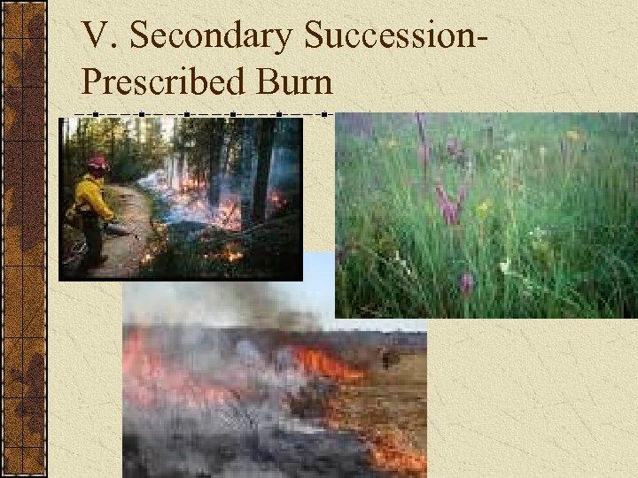 V. Secondary Succession. Prescribed Burn