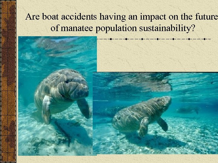 Are boat accidents having an impact on the future of manatee population sustainability?