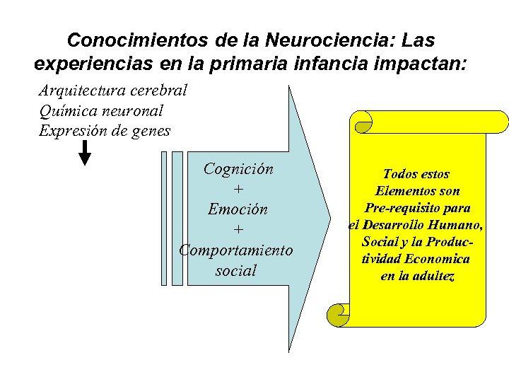 Conocimientos de la Neurociencia: Las experiencias en la primaria infancia impactan: Arquitectura cerebral Química