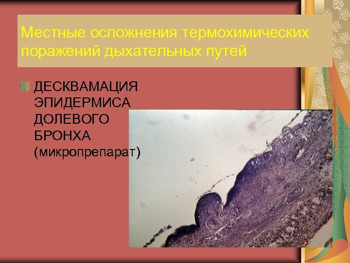 Местные осложнения термохимических поражений дыхательных путей ДЕСКВАМАЦИЯ ЭПИДЕРМИСА ДОЛЕВОГО БРОНХА (микропрепарат)