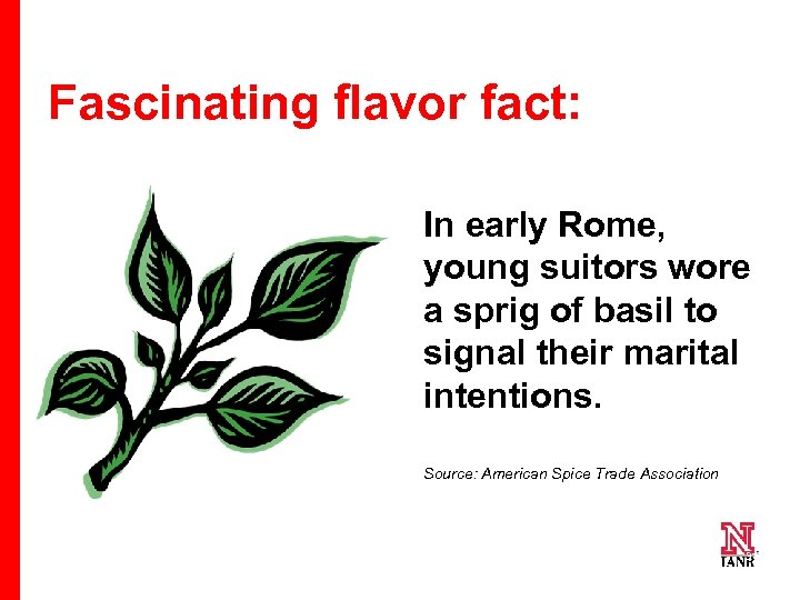 Fascinating flavor fact: In early Rome, young suitors wore a sprig of basil to