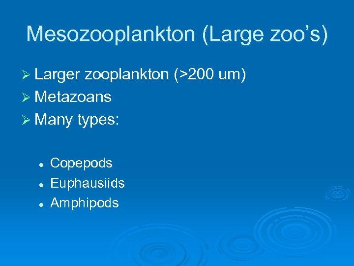 Mesozooplankton (Large zoo's) Ø Larger zooplankton (>200 um) Ø Metazoans Ø Many types: l