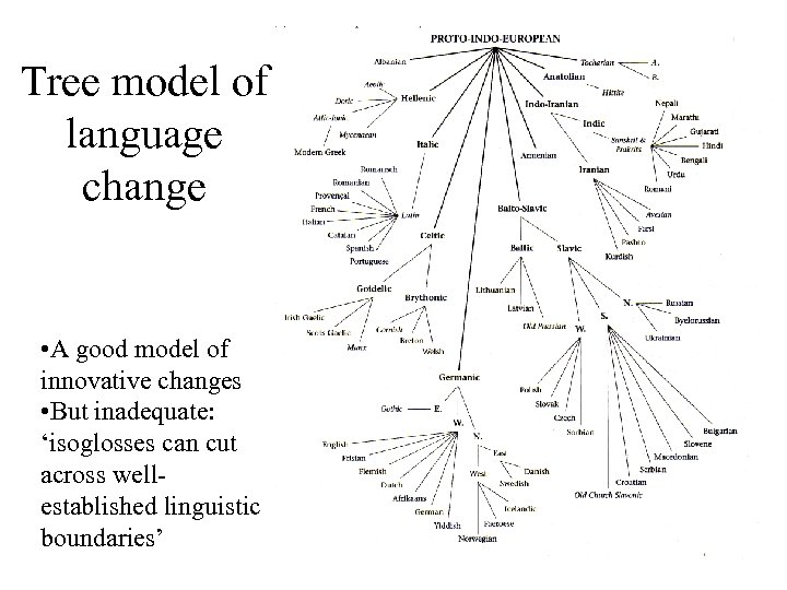 Tree model of language change • A good model of innovative changes • But
