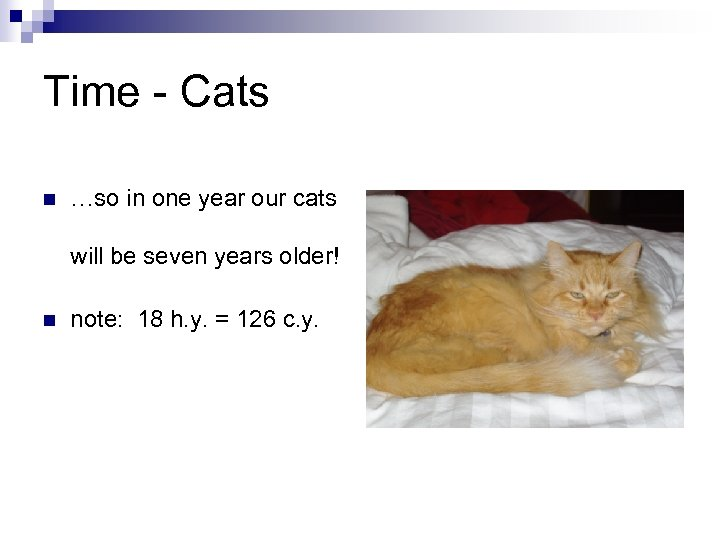 Time - Cats n …so in one year our cats will be seven years