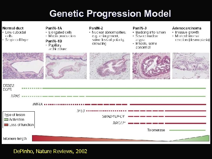 Genetic Progression Model De. Pinho, Nature Reviews, 2002