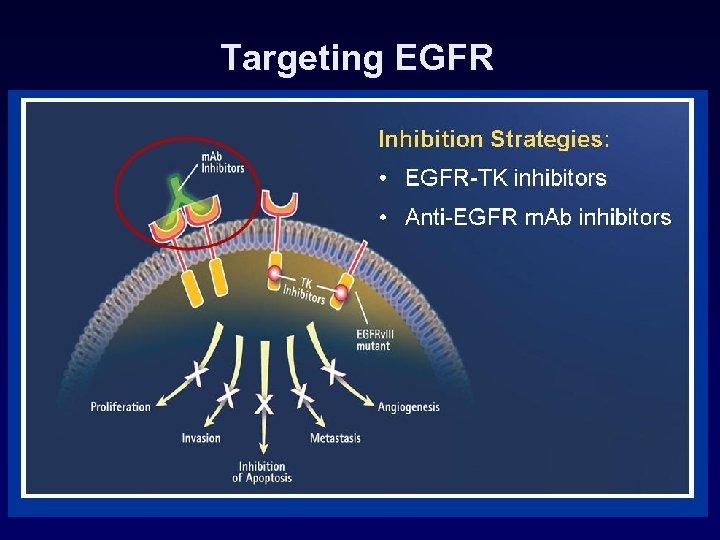 Targeting EGFR