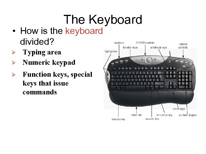 The Keyboard • How is the keyboard divided? Ø Ø Ø Typing area Numeric