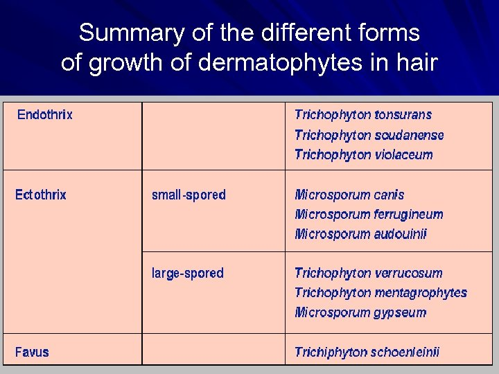 Summary of the different forms of growth of dermatophytes in hair