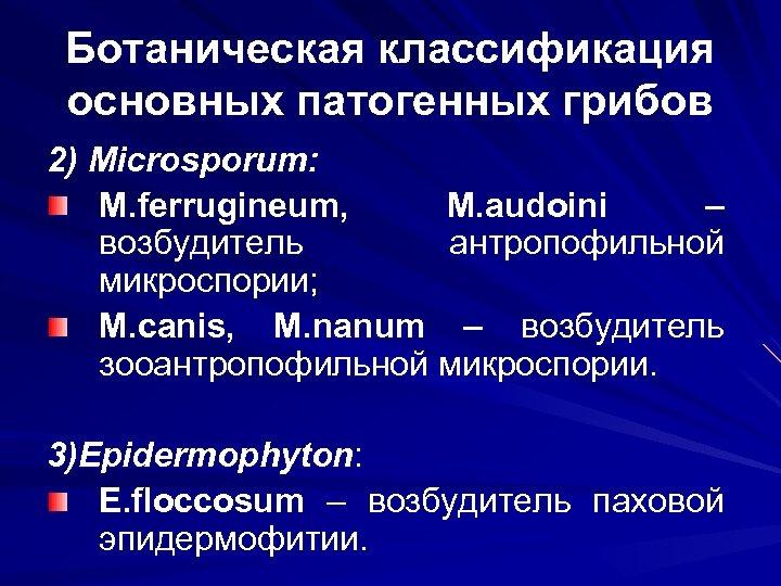 Ботаническая классификация основных патогенных грибов 2) Microsporum: M. ferrugineum, M. audoini – возбудитель антропофильной