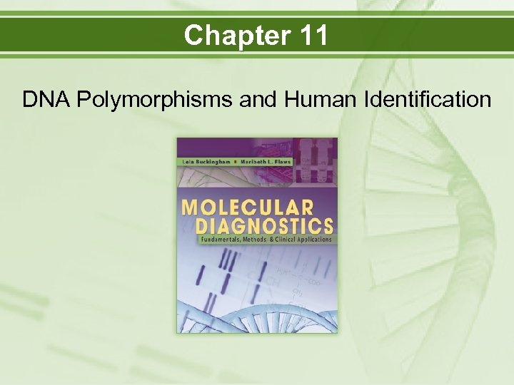 Chapter 11 DNA Polymorphisms and Human Identification