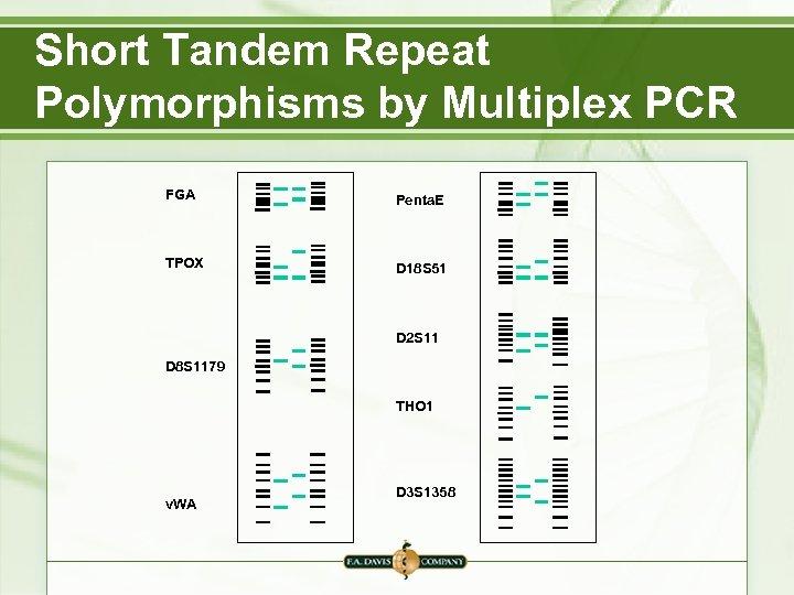 Short Tandem Repeat Polymorphisms by Multiplex PCR FGA Penta. E TPOX D 18 S