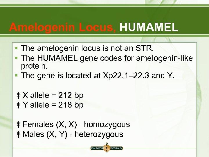 Amelogenin Locus, HUMAMEL § The amelogenin locus is not an STR. § The HUMAMEL