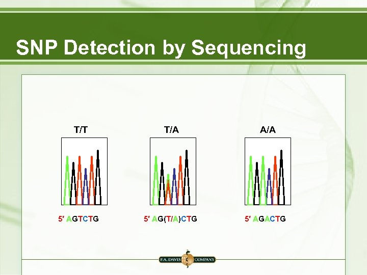 SNP Detection by Sequencing T/T 5′ AGTCTG T/A 5′ AG(T/A)CTG A/A 5′ AGACTG