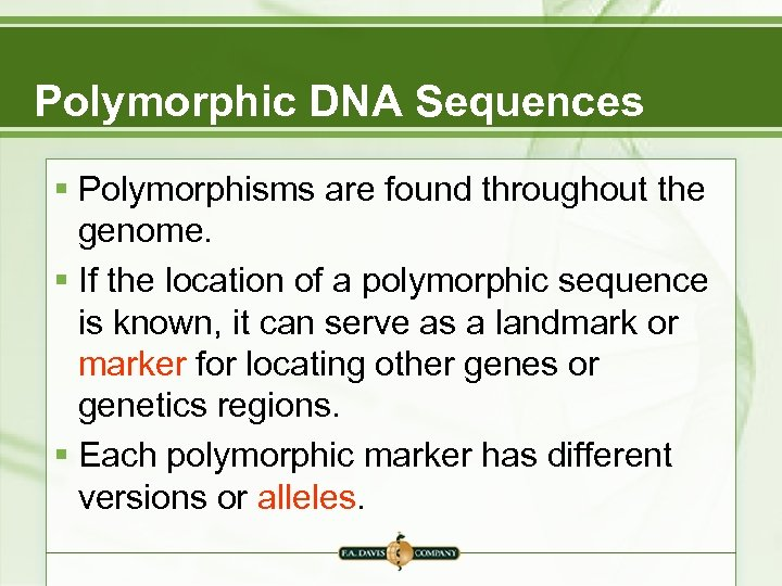 Polymorphic DNA Sequences § Polymorphisms are found throughout the genome. § If the location