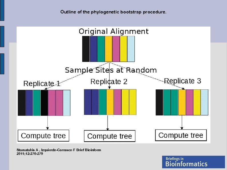 Outline of the phylogenetic bootstrap procedure. Stamatakis A , Izquierdo-Carrasco F Brief Bioinform 2011;