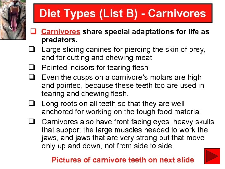 Diet Types (List B) - Carnivores q Carnivores share special adaptations for life as