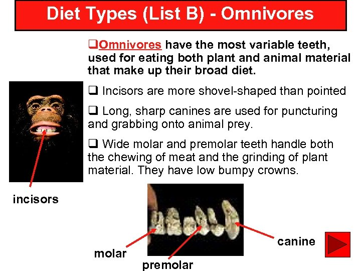 Diet Types (List B) - Omnivores q. Omnivores have the most variable teeth, used